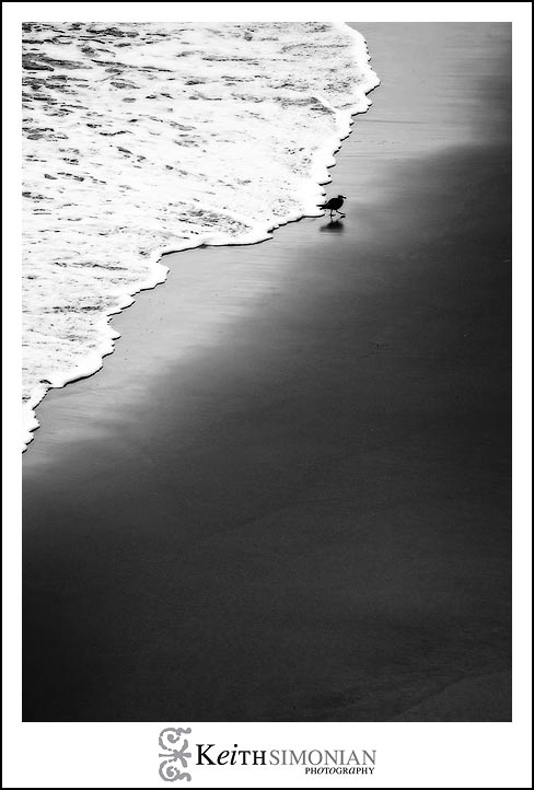 Waves chase this seagull along the beach