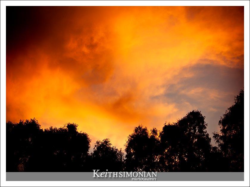October sunset over Eucalyptus trees