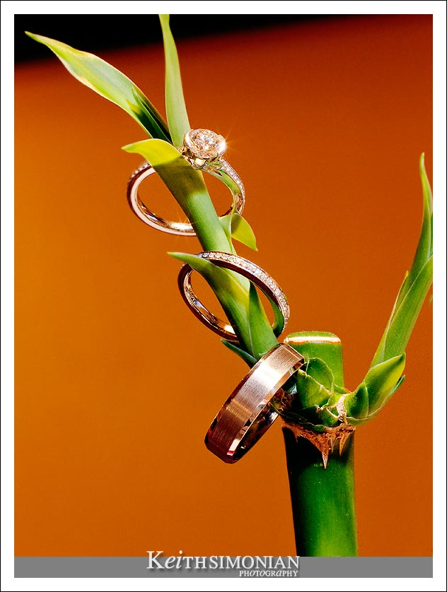 The bride and grooms wedding rings on a Lucky Bamboo Plant