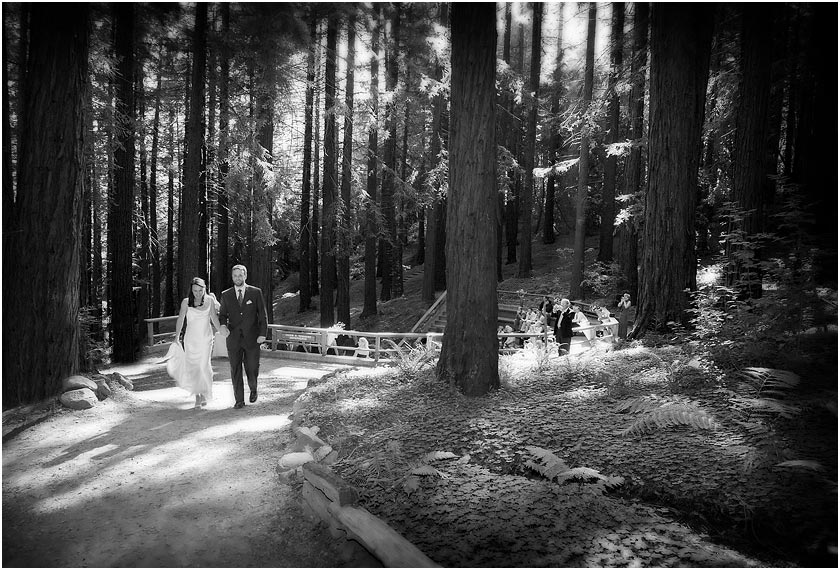 Just married couple walk amoung the Redwoods at the Berkeley Botanical Garden