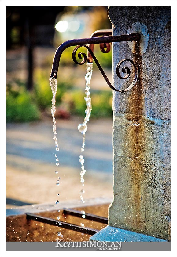 Timeless fountain at the winery