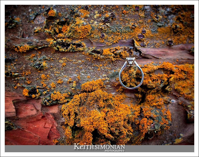 Engagement ring sits on the moss of a tree in Sutro Heights park in San Francisco