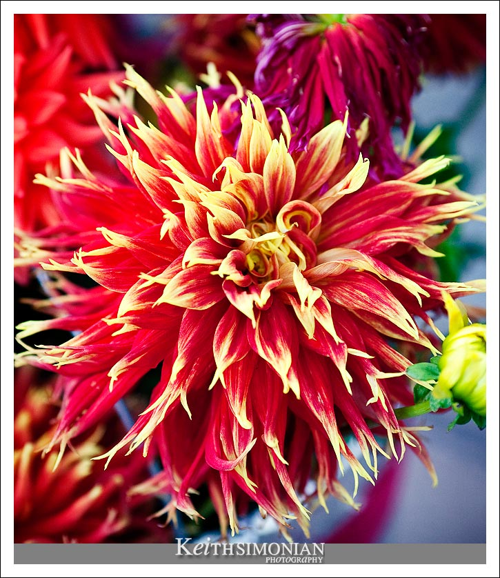 Red flowers at to the excitement of the day