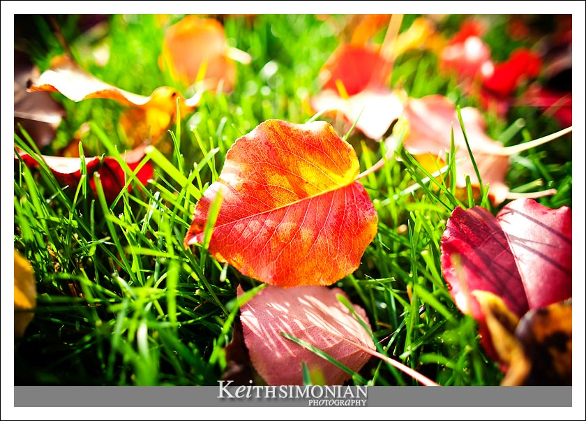 After the beauty of the fall leaves changing color, you get the mess of all those leaves on the ground and lawn.