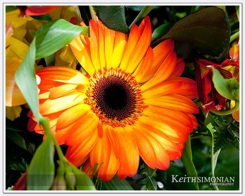 Organge flower photo