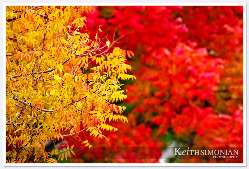 Yellow and red leaves on trees