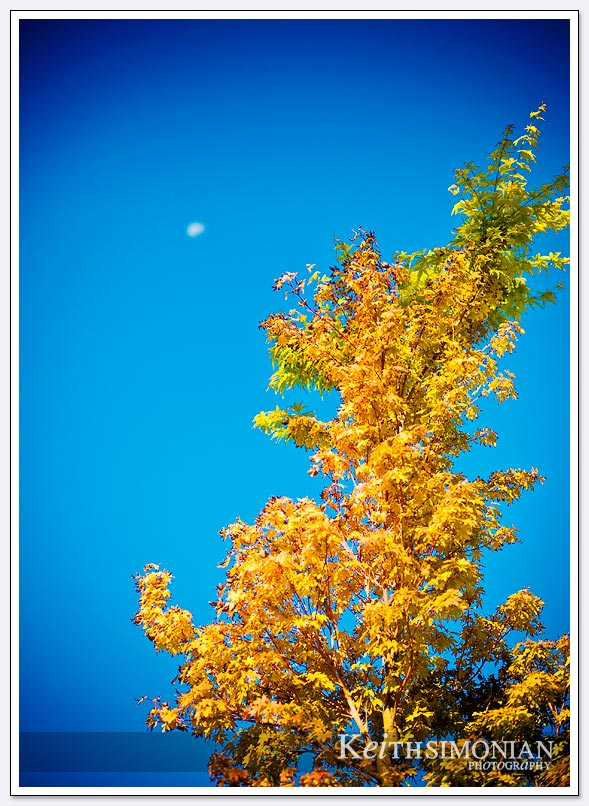 Moon above tree in blue sky