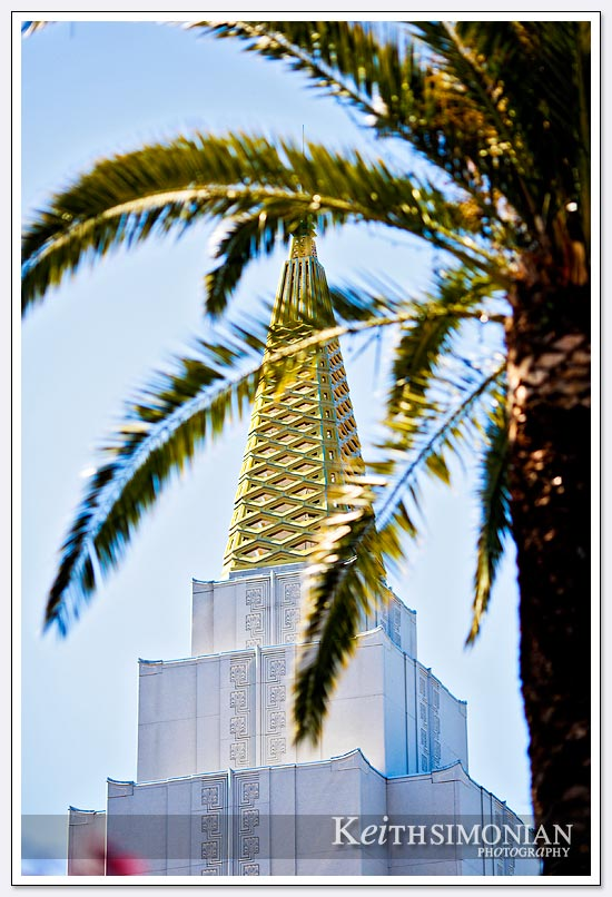 The Oakland Mormon LDS temple with a palm tree framing the golden tower