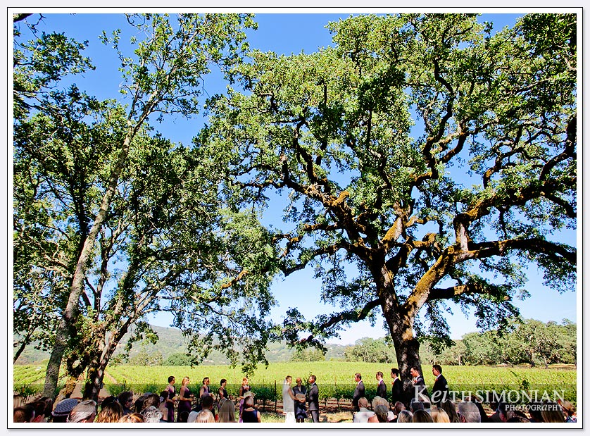 B.R. Cohn Winery wedding takes place outside under the shade of the trees