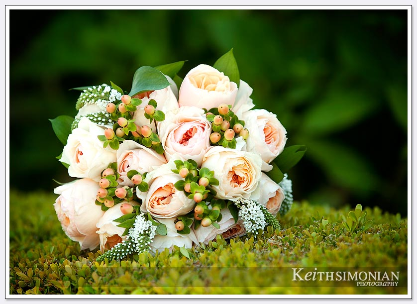 The bride's bouquet is photographed on a bush at the Oakland LDS temple