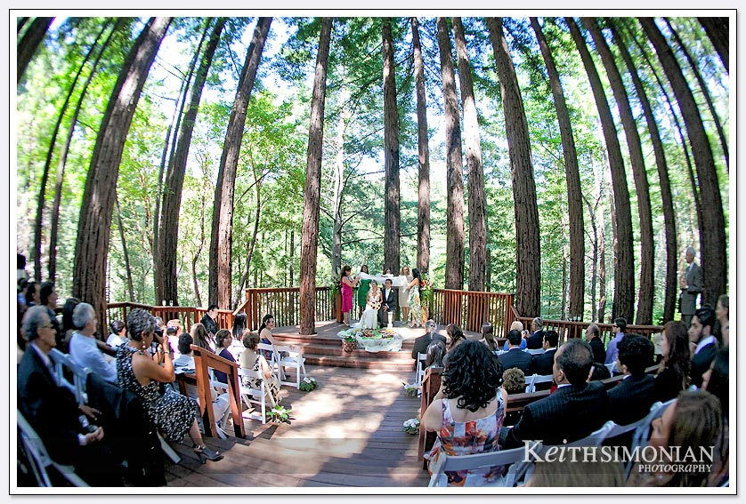Fisheye lens captures the redwood trees climbing to the sky at the Amphitheater of the Redwoods at Pema Osel Ling