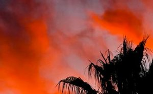 Sunset Eye Candy – Blazing Red sky with Palm Tree
