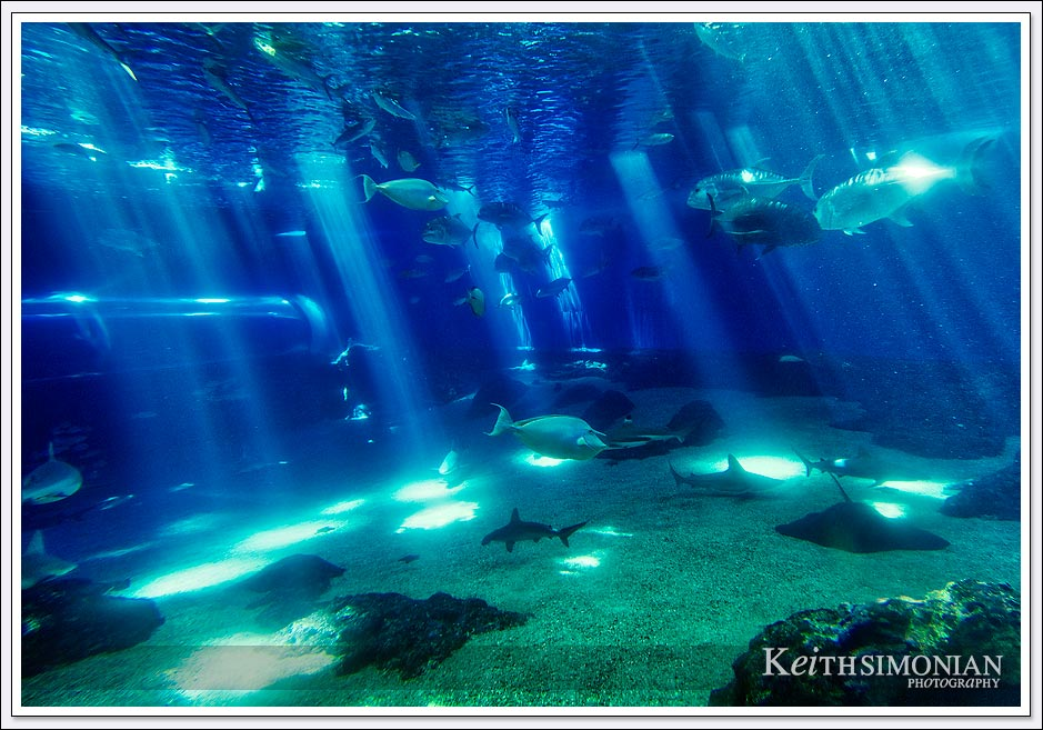 Maui Ocean Center Open Ocean Exhibit