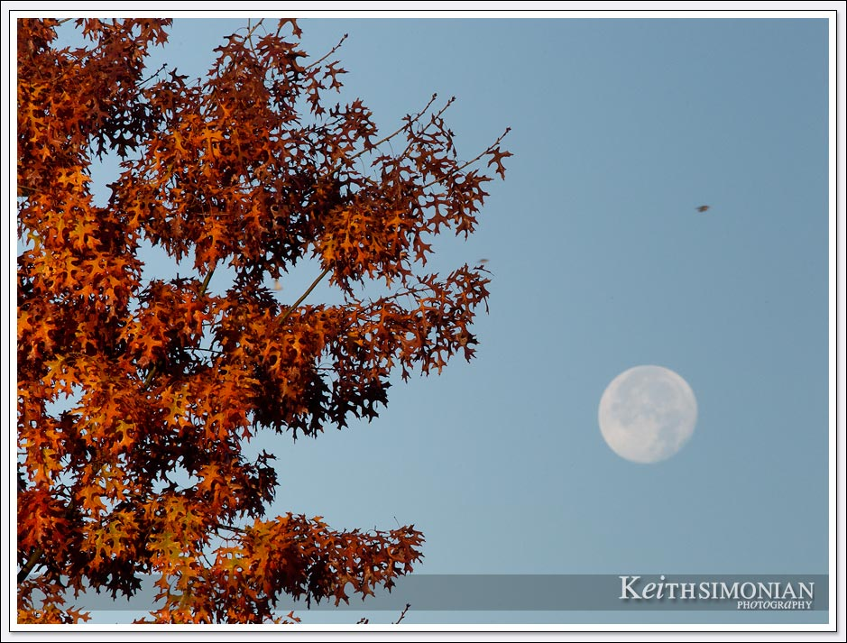The clear sky provided a winter photographer of the tree leaves turning red and a the full moon