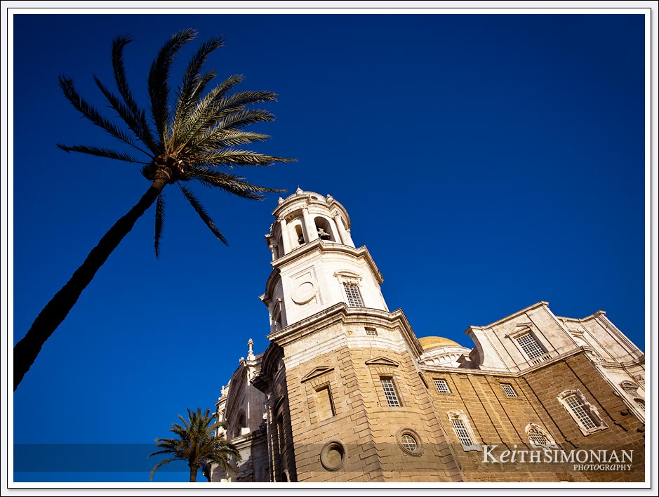 Palm tree and tower of Catedral Nueva in Cadiz, Spain.