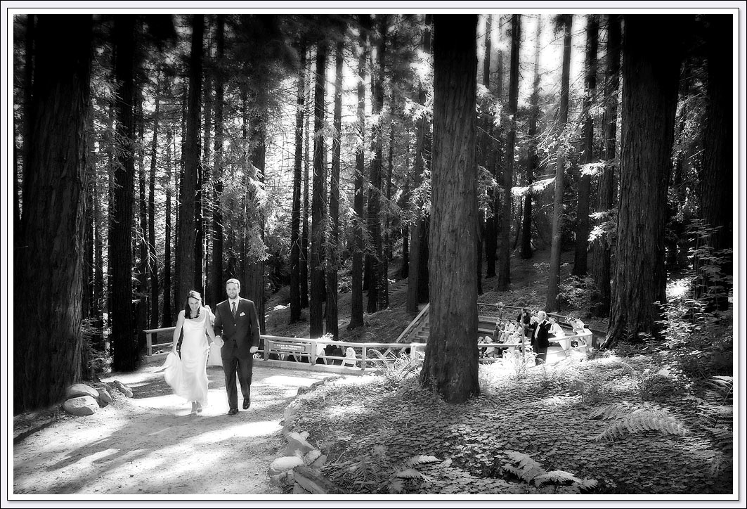 Just married bride and groom among the Redwood trees