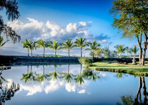 Palm trees reflect in the calm waters of Liliuokalani Park