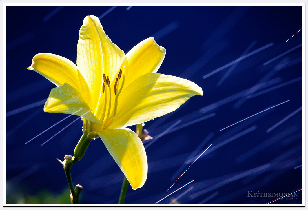 Yellow flower with streaks of water passing by.
