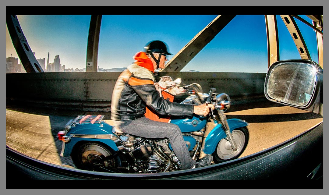 Oakland - San Francisco Bay Bridge Lower Deck Motorcycle rider with Dogs